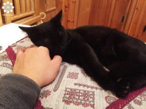 2015.12 猫カフェねこびやか 手枕ですやすや