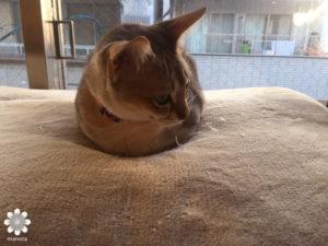 2016.02 広島猫カフェ バロン ポロ1
