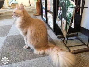 2016.02 Cat cafe Nyanny サラ