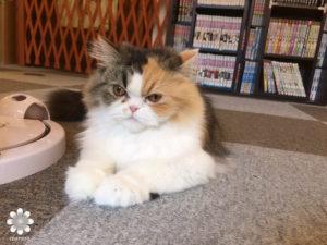 2016.02 Cat cafe Nyanny めい2