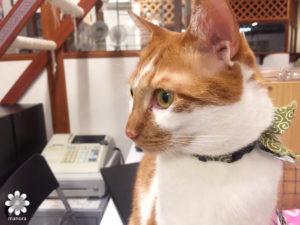 Cat cafe Nyanny1
