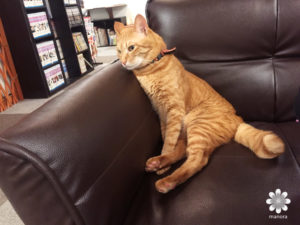 Cat cafe Nyanny4