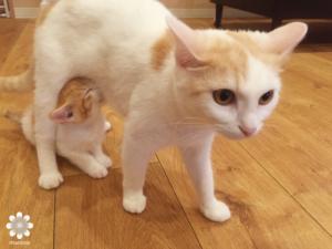 2016.08 CatCafeOBC 猫3