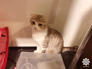 201702猫カフェ きゃりこ新宿店 その3