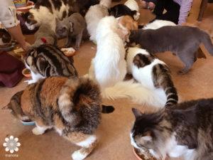 201702猫カフェ てまりのおうち その2