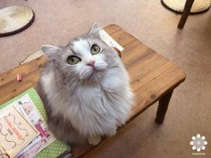 201702猫カフェ てまりのおうち その3