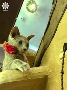 201702猫カフェ てまりのおうち その6
