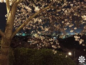 岡山半田山植物園夜桜と夜景
