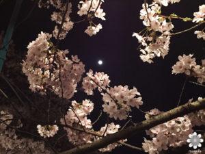 岡山半田山植物園夜桜と月