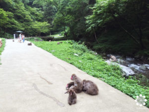 神庭の滝 猿