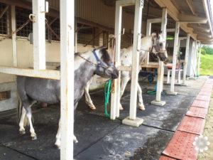 ジャージーランド 馬