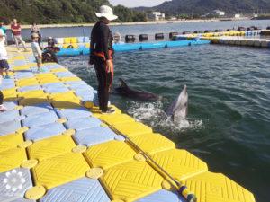 香川ドルフィンセンターのイルカ