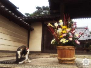 倉敷野良猫