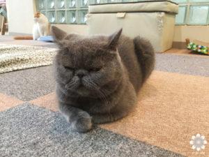 猫カフェロンロン イヴ