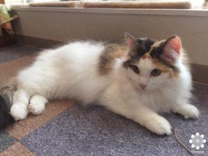 猫カフェロンロン ココ1