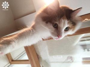 猫カフェロンロン ココ3