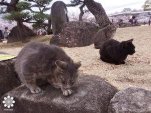 姫路城 野良猫