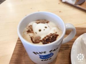 岡山猫カフェBLUE CAT CAFE猫マシュマロ