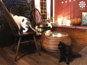 岡山猫カフェ「猫茶」