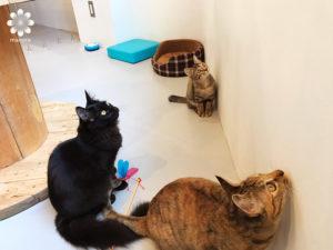 岡山猫カフェBLUE CAT CAFE