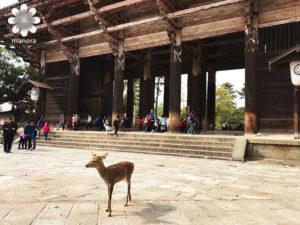奈良南大門