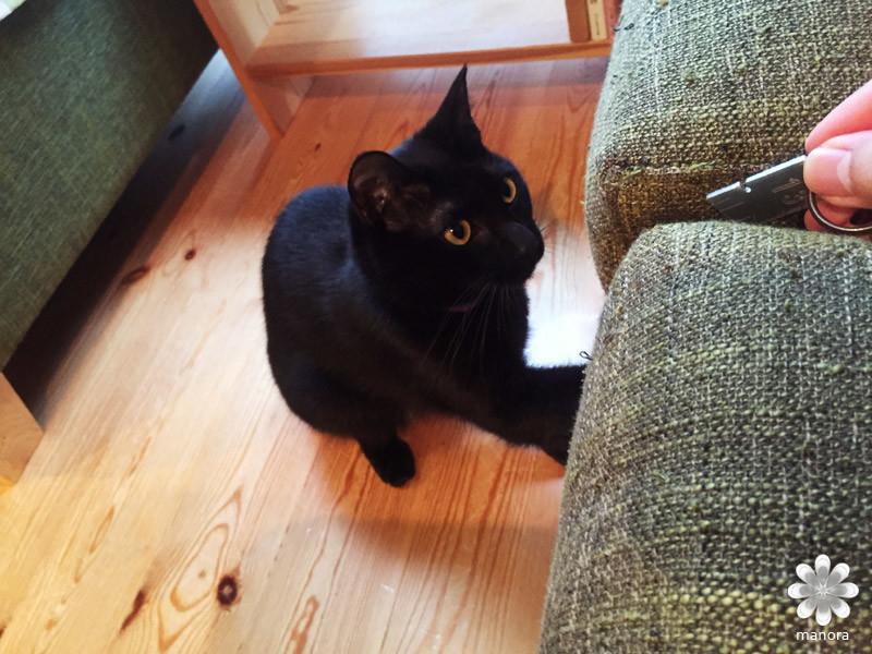 2015.12 猫カフェねこびやか じゃれる黒猫