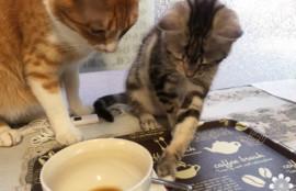 高松猫カフェ 肉灸120802