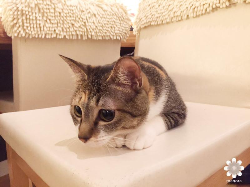 2016.03 博多猫カフェ キューリグ04