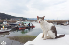 真鍋島の猫たち8