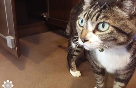 黒川温泉 山みず木の猫